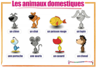 French Animals - Les animaux