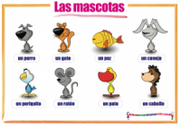 Spanish animals Las mascotas