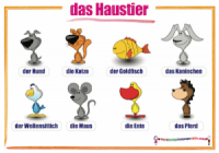 German animals wall chart / das Haustier